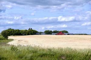 uma fazenda de pradaria foto