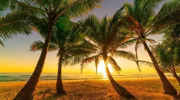 silhueta coqueiros na praia ao pôr do sol ou nascer do sol no céu foto