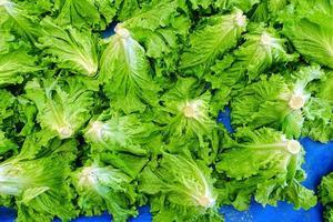 alface vegetal fresca e saudável foto