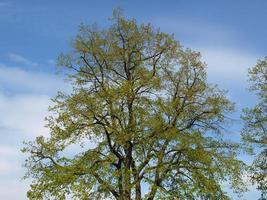 árvore sobre o céu azul foto