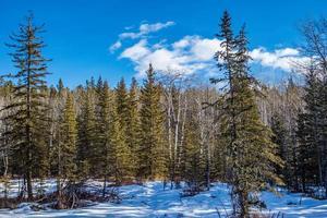 inverno no parque provincial de Sheep River, Alberta, Canadá foto