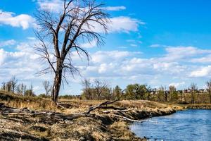 o rio Bow flui pelo parque foto