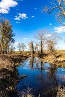 uma lagoa reflete as árvores caídas no parque foto