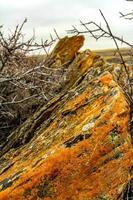 temporada de outono no deserto do sul foto