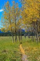 cores do outono ao redor do parque foto