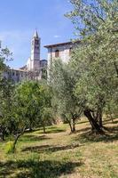 oliveiras na vila de assis, na região de umbria, itália. foto