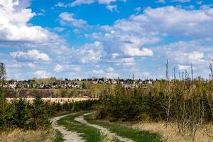 nuvens fofas e pinheiros foto