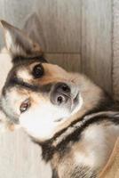 cão engraçado sem raça definida deitado no chão foto