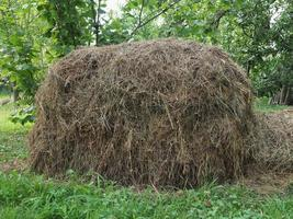 monte de feno no gramado foto