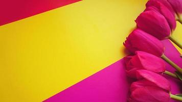 tulipas coloridas rosa sobre um fundo colorido com espaço de cópia foto