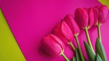 tulipas cor de rosa em fundo rosa. imagem de espaço de texto foto