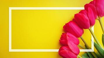 cartão de quadro de flores de tulipas. tulipas rosa e moldura branca foto