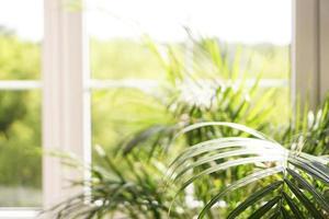 janela grande com luz do sol - fundo de verão foto