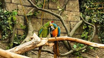 papagaio arara azul e amarela em um galho de árvore. fundo da selva. foto