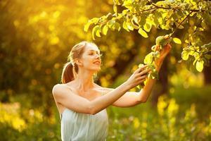 mulher feliz pega uma maçã de uma árvore foto