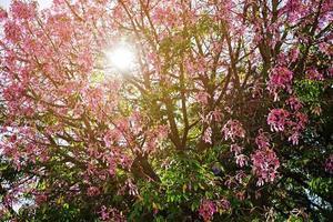 árvore com flores rosa desabrochando foto