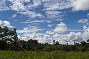 plantas de óleo de palma e nuvens foto