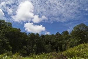 árvores e nuvens foto