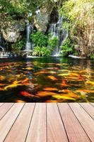peixes koi em lago no jardim com cachoeira e passarela de madeira foto