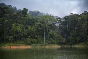árvores densas da floresta em uma selva envolta em névoa foto
