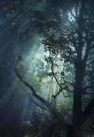 raio de sol sobrepõe-se à floresta espessa foto