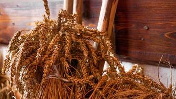 douradas espigas de trigo em um fundo de madeira. orelhas para fazer farinha foto