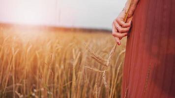 mulher em campo de trigo, mulher segura espiga de trigo na mão foto