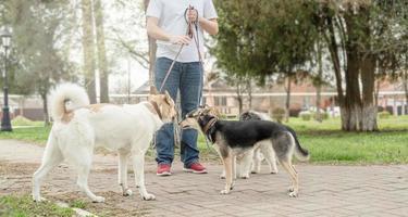 caminhante profissional do sexo masculino passeando com uma matilha de cães na trilha do parque foto
