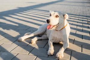 cão fofo de raça misturada esperando seu dono no parque em um dia ensolarado foto