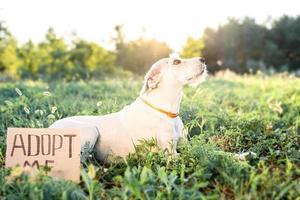 cachorrinho fofo de raça misturada com as palavras me adote foto