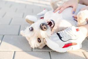 jovem brincando com seu cachorro no parque foto