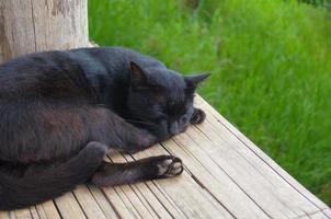 o gato preto dormiu foto