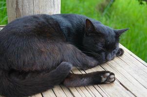 o gato preto dormia na maca de madeira amarela. foto