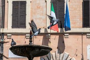 Câmara Municipal de Spoleto com bandeiras e pombas foto