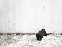 gato preto no fundo da parede branca foto
