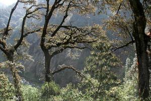 galhos de árvores da floresta foto