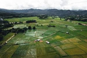 paisagem de campo de arroz em casca na Ásia, vista aérea de campos de arroz foto