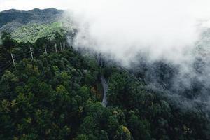 estrada na floresta, estação das chuvas, árvores da natureza e viagens com nevoeiro foto