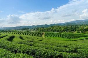paisagem da fazenda de chá verde, a vista dos campos de chá verde. foto