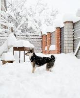lindo cachorro sem raça definida brincando na neve no quintal foto