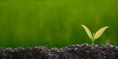 plantar árvores para crescer no solo foto
