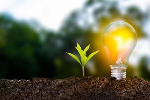 conceito de energia renovável dia da terra foto
