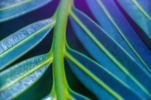 folhagem verde tropical bonita abstrata focaliza apenas foto