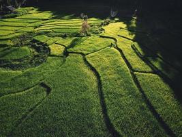 paisagem de campo de arroz em casca na ásia, vista aérea foto