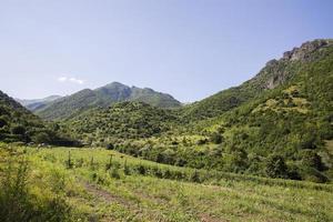 paisagem natural. a floresta da montanha. foto