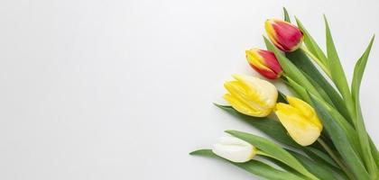 copie flores de tulipas de espaço. resolução e bela foto de alta qualidade