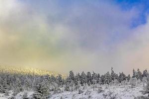 sol na neve em pinheiros gelados brocken harz alemanha foto