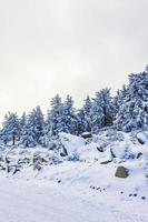 nevou em uma paisagem de pinheiros gelados, montanha harz alemanha foto