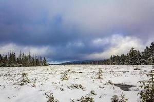 nuvens escuras acima da paisagem dos pinheiros montanha harz alemanha foto