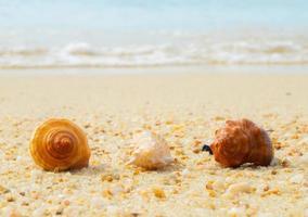 concha do mar nas areias. fundo do horário de verão. foto